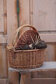 Knitting in knitting basket in front of rustic wooden door