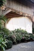 Hortensien vor der überdachten Terrasse mit Stoffvorhängen