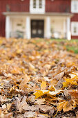 Autumn leaves on ground in front of Swedish house