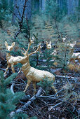 Golden stag and deer figurines on woodland floor amongst tree seedlings