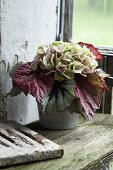 Autumnal bouquet of Rex begonia leaves and hydrangea flowers