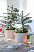Small potted fir trees decorated with moss and artificial snow as festive table decoration