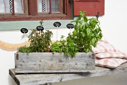Herbs planted in wooden crate