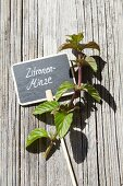 Bergamot mint and plant label on weathered wood