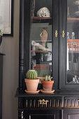 Cacti on black dresser