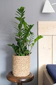 Zimmerpflanze im Übertopf aus Seegras neben dem Bett