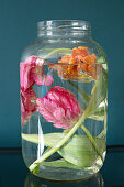 Tulips submerged in large screw-top jar of water