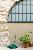 Succulents and garden hose in front of stone wall with arched window