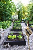 Raised vegetable beds surrounded by gravel paths