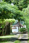 Path leading through trees to beach with thatch parasols