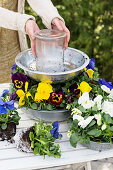 Woman building flower stand from metal bowls and planting with pansies