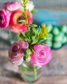 Delicate ranunculus in glass vase
