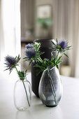 Blue sea holly flowers in two glass vases in front of black vase
