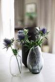 Blaue Distelblüten in zwei Glasvasen vor einer schwarzen Vase