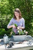 Plant Zinc Jardiniere with Mandevilla Sundaville 'Pink' 'White'