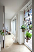 House plants suspended in large living room window