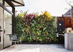 Vertikale Bepflanzung an einer Terrassenwand