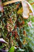 Nahaufnahme einer vertikalen Bepflanzung mit Begonien