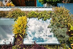 Flachdach mit exotischer Bepflanzung und zwei Dachfenstern