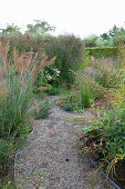 Grasses in prairie garden