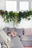 Grey corner sofa with scatter cushions below plants on windowsill