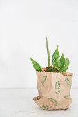 Kaktus mit jungen Trieben in einer mit Blattmotiv bedruckten Papiertüte