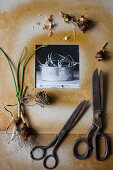 Black-and-white photo in hand-made frame, vintage scissors and spring bulbs