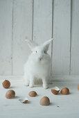 Weißer Hase und Eierschalen