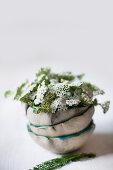 Schafgarbe in einem Stapel aus Schälchen mit gewelltem Rand