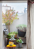 Plants on tiny city balcony with view of roofscape