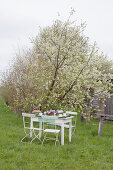Festively set table under flowering apple tree in garden