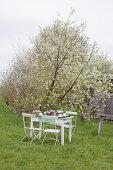 Festlich gedeckter Tisch unter dem blühenden Apfelbaum im Garten