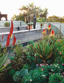 Roof terrace planted with red hot pokers