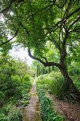 Gartenweg mit Pflastersteinen und mit Efeu bewachsen