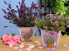 Flowering lavender and thyme in small buckets decorated with transfers