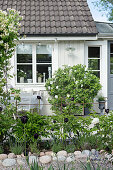 Flowering plants in garden outside white Scandinavian wooden house