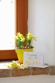 Narcissus in yellow pot and invitation card on windowsill