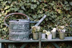 Alte Gießkanne und Vasen mit kleinen Sträußen vor Efeuwand