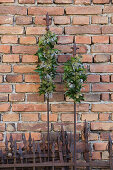 Arrangements of ivy on metal rods against brick wall