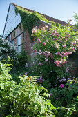 Old brick house surrounded by flowering roses