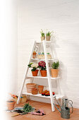 Plants and pots on white ladder shelves against brick wall