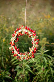 Wreath of rose hips in garden