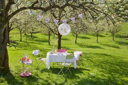 Gedeckter Tisch, Lampion und Getränketisch unter blühendem Kirschbaum im Garten