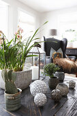 Plants and spherical ornaments on table in living room
