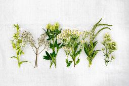 Verschiedene weiße Sommerblumen (u.a. Klee, Schleierkraut, Kamille, Baldrian)