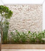 Pflanzen im rechteckigen Teich vor Natursteinmauer und Hauswand