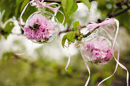 Peonies in glass spheres hung from tree