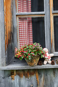 Knitted doll next to potted Gaultheria on windowsill