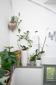 Various houseplants lined up on ledge