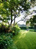Rasenfläche unter Bäumen in elegantem Landschaftsgarten
